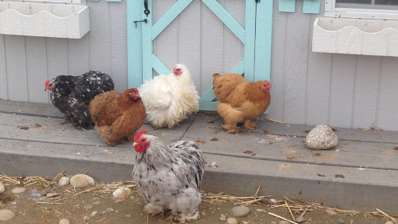 10 Chicken Coop Hacks You'll Want to Steal
