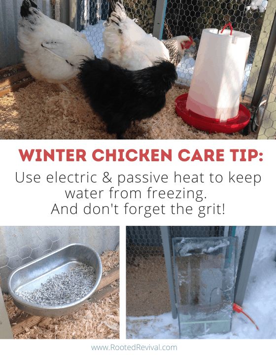 Pictures of chicken waterers and a grit container. Text reads: Use electric and passive heat to keep water from freezing. And don't forget the grit!