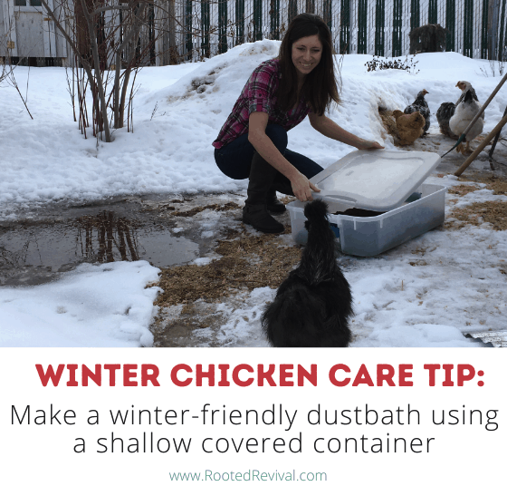 Woman uncovering tupperware container being used as a temporary dustbath. Text reads: Make a winter-friendly dustbath using a shallow covered container