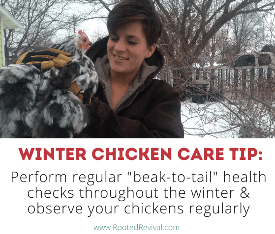"""Woman looking at chicken. Text reads: Perform regular """"beak-to-tail"""" health checks throughout the winter & observe your chickens regularly"""""""