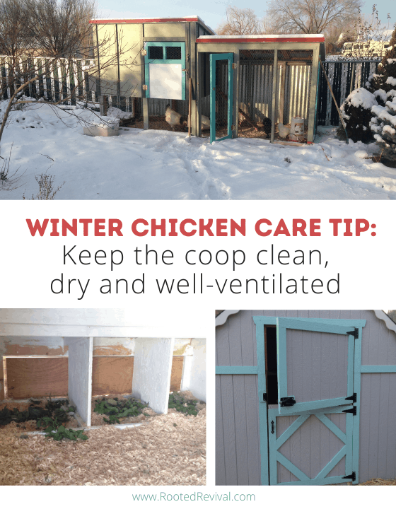 3 pictures showing a chicken coop with dry bedding and open doors/windows for airflow