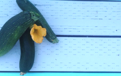 Ten Delicious Ways to Use Zucchini