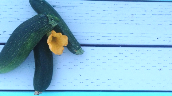 Too much zucchini from the garden? Time to get creative! Here are ten quick, easy & delicious ways to use all that zucchini!