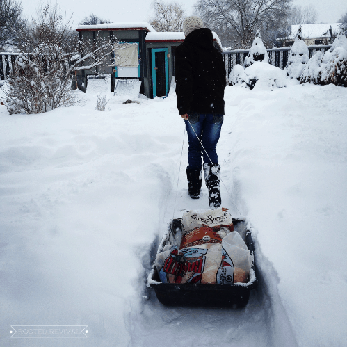 Woman pulling sled through the snow with bags of animal feed loaded on it.