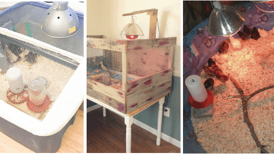 12 DIY Chick Brooders You Can Build This Weekend!