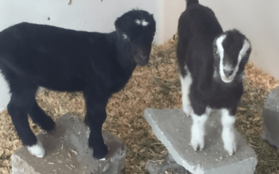 March 2019: Baby Goats & Baby Plants