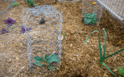 How to Make a DIY Garden Cloche + Gardening with Chickens