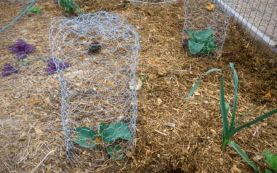 How to Make a DIY Garden Cloche + Gardening with Chickens