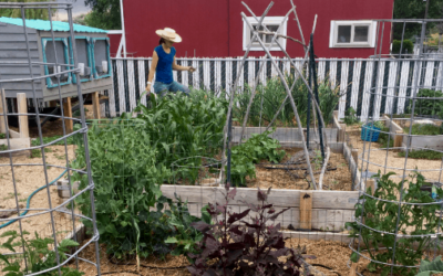June 2019: Garden Watering System + Homestead Overwhelm