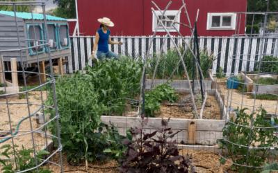 June 2019: Garden Watering System + Homestead Overwhelm
