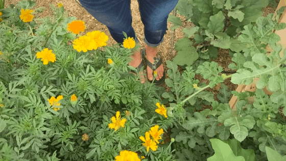 July 2019: Raising Meat Chickens & Preserving Apricots