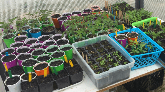 All About Seed Starting Containers