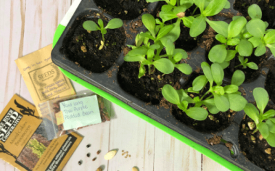 How to Sow Seeds in Containers