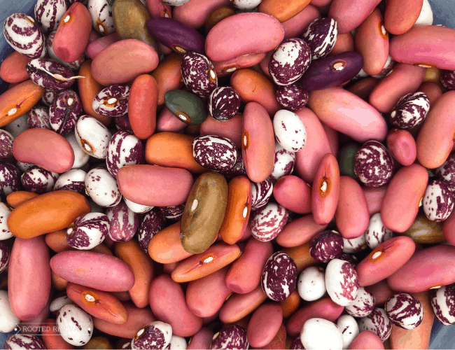 A colorful assortment of dried beans